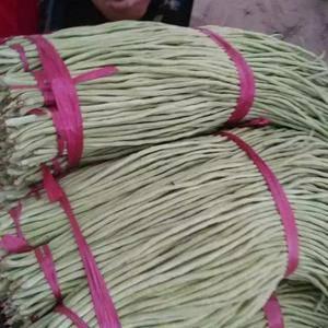 河北省邯郸市永年长豆角大量供应中,有需要的老板们打电话联...