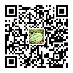 辽宁新民大棚西瓜大量上市中,品种有甜王,京欣,地雷008...