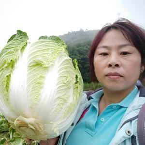 高山大白菜薄皮椒西红柿