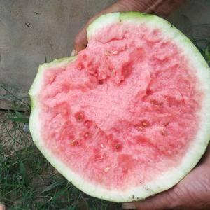 有收购西瓜的吗?下雨对西瓜有影响吗?