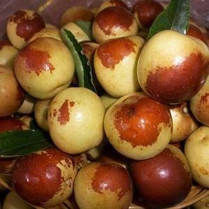 沾化富源水果合作社成立于2009年,位于滨州市沾化县下洼...
