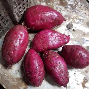 大量供应越南红薯和紫薯。有需要的联系,云南河口口岸。价格...