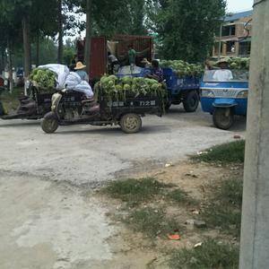 新红宝西瓜热卖中欢迎前来采购!