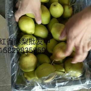 陕西红香酥梨基地价格