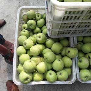 大量藤木苹果批发,质量好价格低廉,有需要联系我15666...