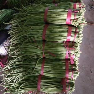 本地大量种植基地各种蔬菜  长豆角 尖椒圆椒 红辣椒9号...