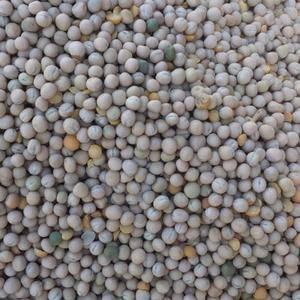 长期供应各种豌豆,电话15192597275