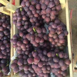 邯郸葡萄上市了品种齐全13293013940