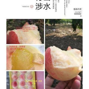 正宗阳山水蜜桃,自家种植,精心管理,全园施用农家肥,大豆...
