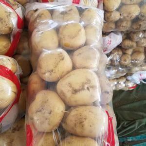 土豆大量上市,中薯,荷兰,大西洋,都有货,欢迎来电
