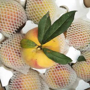 83黄桃,黄桃罐头