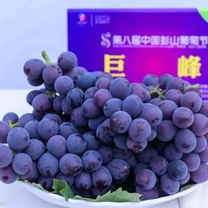 河北保定清苑县王盘葡萄基地具有近28000亩的种植面积和...