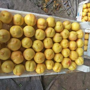 秦皇岛那个地方有黄油桃?