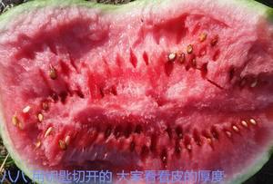 中洲农场为湖北著名西瓜品牌的主产区,口感脆爽、汁多,含糖...