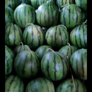 我产区西瓜大量上市品种甜王京欣花长皮金城系列欢迎新老客商...