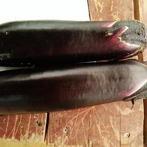 茄子豆角上市中可做脱水可走市场有需要的联系我