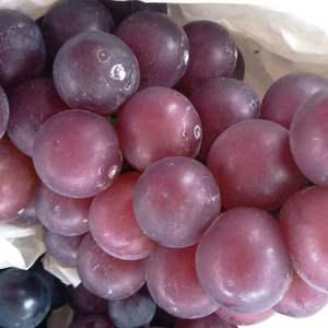 乒乓球葡萄:近圆形,紫黑色,果皮厚,果肉汁多,含糖量16...