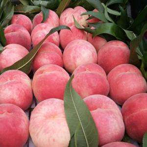 每年自7月中旬到10月中旬,肥城桃系列品种不间断上市。我...