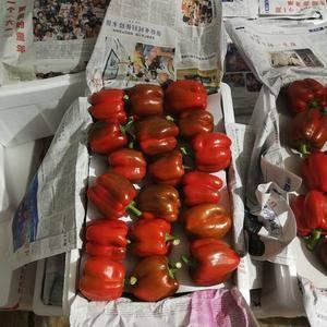 大量五彩椒上市,红椒黄椒绿椒。