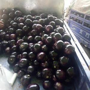 紫光园茄大量供应中,有需要的老板联系我,欢迎实地考察或电...