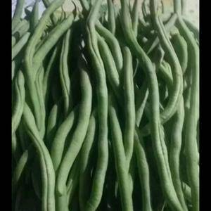 架豆多少钱?