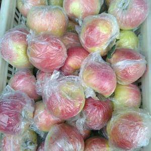 山东苹果之乡,沂蒙山苹果种植基地欢迎您【13853957...