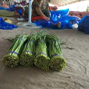 常年供应金乡优质蒜苔,精加工蒜苔,产地直供费用少,合作先...