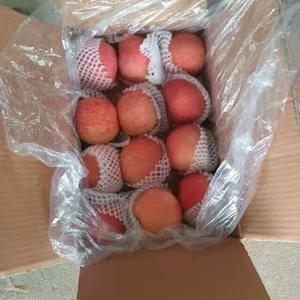 【18653912855现有苹果(藤木红嘎啦,美八、红将...