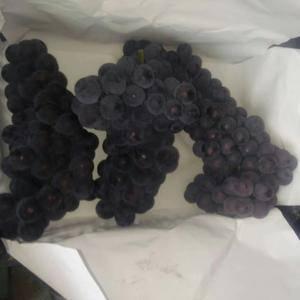 京亚葡萄大量上市,有备用的遇冷设备,串大,颜色好,有需要...