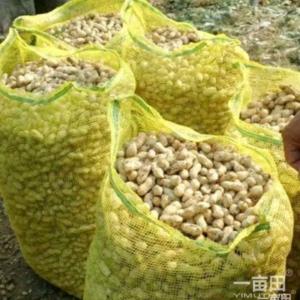 山东夏津鲜花生,鲜红薯,地瓜大量上市。万亩红薯花生种植基...