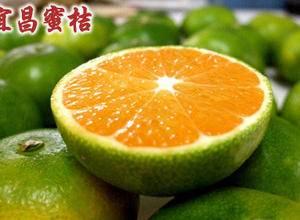湖北宜昌枝江特早早熟蜜桔大量上市,15587922221...