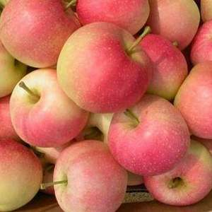 15666192820山东嘎啦苹果,美八苹果,冰糖心苹果...