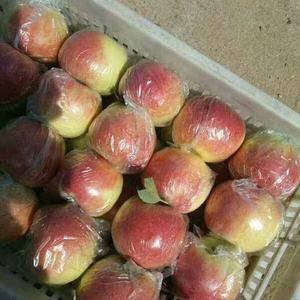 山东万亩15552907687美八苹果,嘎啦苹果,冷库红...