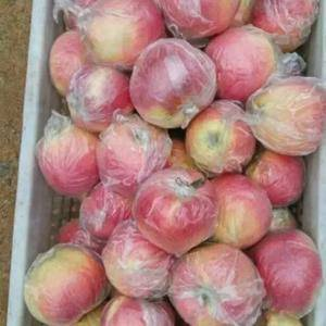 山东苹果产地直销,嘎啦,美八,晨阳,红露,现已大量上市,...