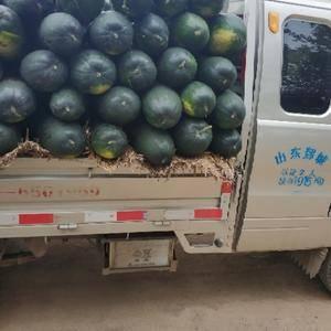 大量供应质量最好的冬瓜