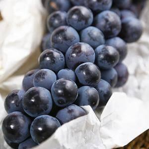 新鲜葡萄批量上市,批发,零售,装箱,无籽提子:夏黑,丰满...