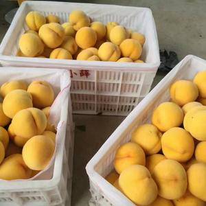 山东黄金油桃,黄金毛桃大量供应产地直销,口感脆甜,货源充...