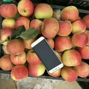 15265492127  我处山东优质〖嘎啦.美八苹果,...
