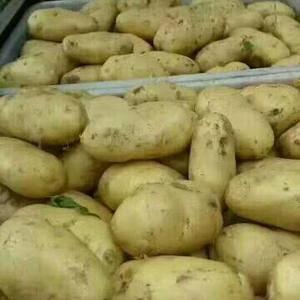 山东优质库存荷兰十五土豆大量销售,需要的加我微信1506...