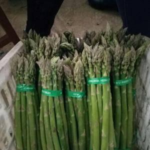 绿芦笋种植技术 一、育苗 1、选用优种:种子质量是芦...