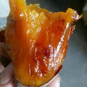 本红薯产地常年大量供应纯沙土种植的鲜红薯,品种有龙薯九号...