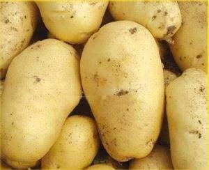 荷兰十五土豆2两以上或者3两以上精品大货,质优价廉,无病...