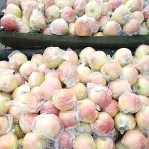 山东潍坊嘎啦苹果大量上市,颜色好,个头大,果型正,有需要...