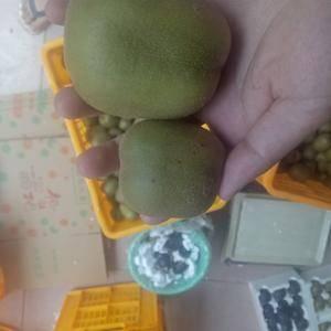 蒲江红心猕猴桃15个包邮大果一件代发, 20个5斤超大...
