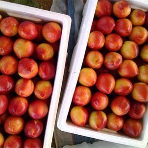 本地出售大量的油桃和桃子