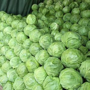 旱地黄心菜已经上市。旱地甘蓝大量走货中。需要的老板速度联...
