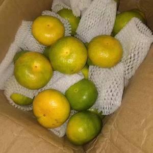 宜昌特早蜜橘大量供货中,皮薄肉嫩,入口化渣,桔香浓郁,酸...