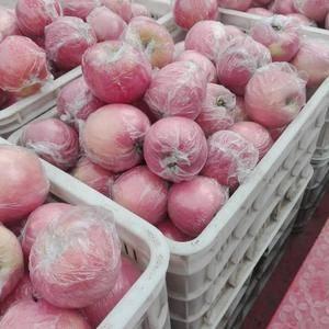 13675399909微信同号山东万亩苹果农户直销:红将...