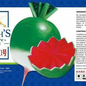 中国最好的满堂红罗卜籽,金玉满堂红1号,大罐装,全国包邮