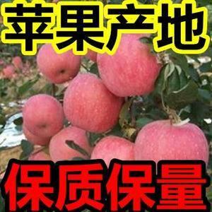 【13563913907】微信同号,山东苹果产地直销★大...